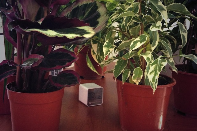 CubeSensors among air-purifying plants