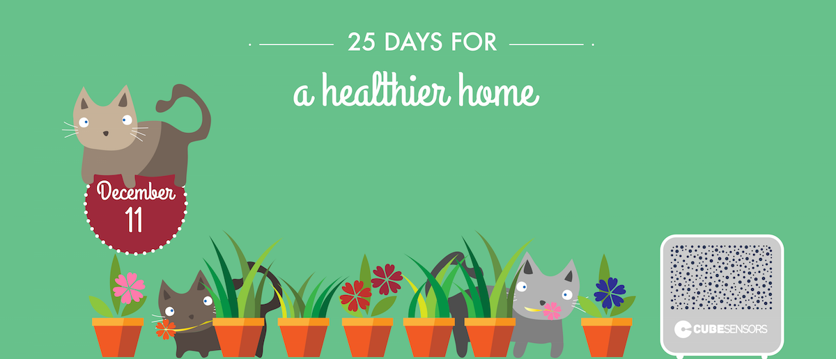 25 days for a healthier home: houseplants aren't miracle workers